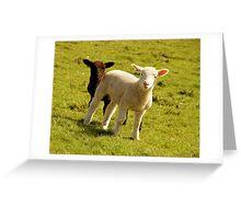 Woolly Love Greeting Card