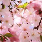 spring  by wistine