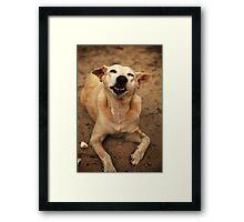 Stray Dog Framed Print