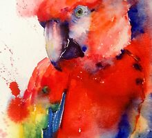 Red the Macaw IPhone Case by Karl Fletcher