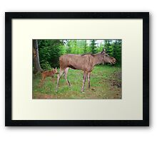 Eurasian Elk with Calf Framed Print