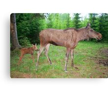 Eurasian Elk with Calf Canvas Print