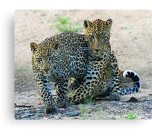Animal affection! Canvas Print