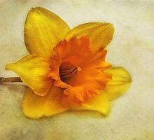 goldmund by lucyliu