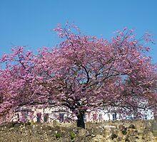 Cherry Tree by Antoinette B