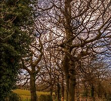 Country Walk by Andrew Pounder