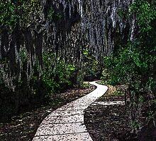 Walkway Thru The Woods by George  Link