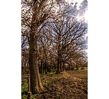 Country Lane Trees Photographic Print