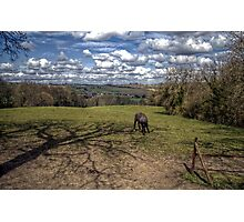 Horse Alone Photographic Print