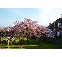 Cherry tree with sea views  Photographic Print