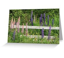 Lupins and Fence Greeting Card