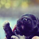 Happy Puppy by ibjennyjenny