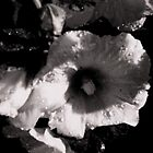 Hollyhock by dalsART