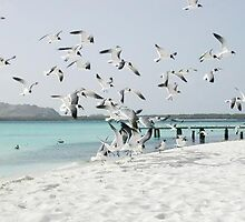 Seagulls by SandraWidner