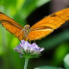 Butterfly with Both Looking Right At me by imagetj