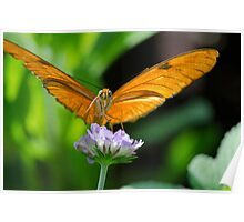 Butterfly with Both Looking Right At me Poster