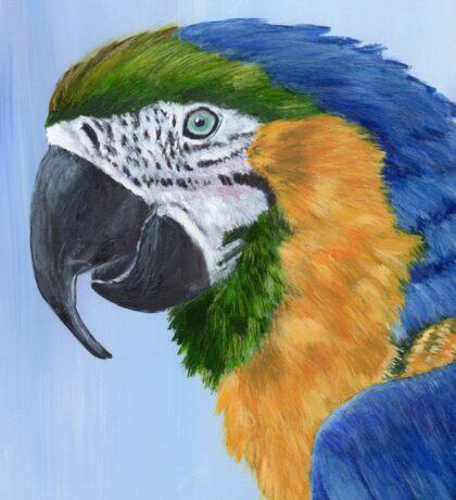 Macaw Sticker