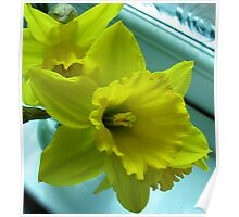 Daffodils Rejoicing Poster