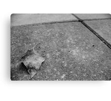 Leaf on the patio Canvas Print