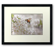 The Buzz In The Garden Framed Print