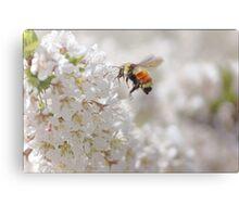 The Buzz In The Garden Canvas Print