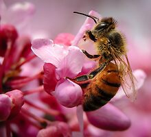Bee on Redbud by JoiRapach