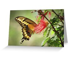 Giant Swallowtail Greeting Card