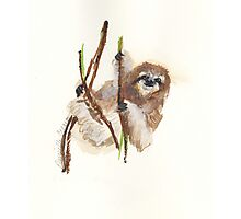 Super Sloth Photographic Print