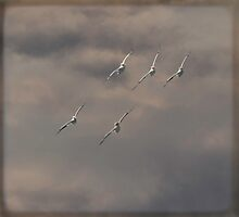 Synchronized Flight by Thomas Young