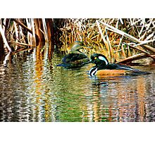 GoldenEye Pair Photographic Print