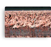 Greater flamingoes, Lake Nakuru Canvas Print