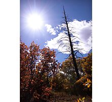 picture book fall III - Dead Tree Photographic Print