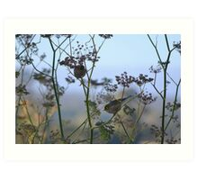 Two Silvereyes Feasting on Fennel Seeds Art Print