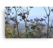 Two Silvereyes Feasting on Fennel Seeds Canvas Print