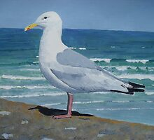 Seagull in Cornwall by trinity123