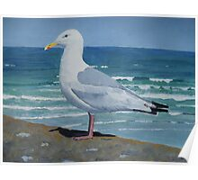 Seagull in Cornwall Poster
