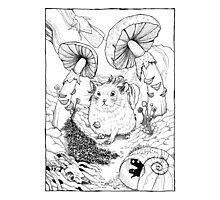 Hamster In Wonderland Photographic Print