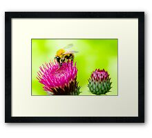 Bumble Bee on Thistle Framed Print