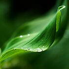 Suspending the droplets, Solomon&#x27;s Seal, County Kilkenny, Ireland by Andrew Jones
