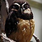 Owl by pratt1ak