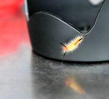 Caterpillar On Lens Hood by SuddenJim