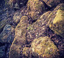 Mossy Rocks by Matti Ollikainen