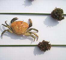 Crab and Juncus Flowers by Jennifer J Watson