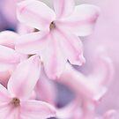 ...pink petals...... by Jane Anastasia Studio