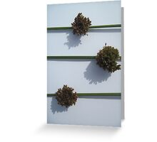 Juncus Flowers Greeting Card