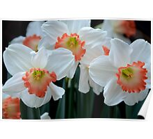 Spring Jonquils Poster