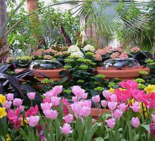 Spring Flower Show by Kathleen Struckle