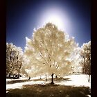 Infrared Tree by Dan  Wampler