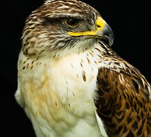 Ferruginous Hawk by mlphoto