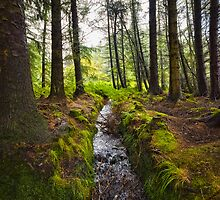 Scottish Woodland Stream by mlphoto